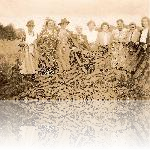 Ladies with camouflage netting
